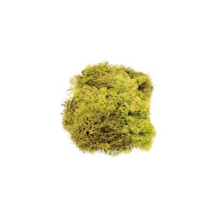 Mousse vert clair 50g
