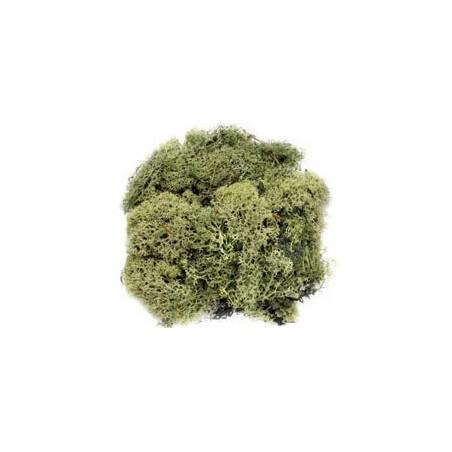 Mousse vert foncé 50g