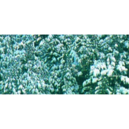 26231 - Foam & Snow