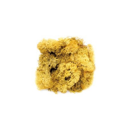 Mousse jaune 50g
